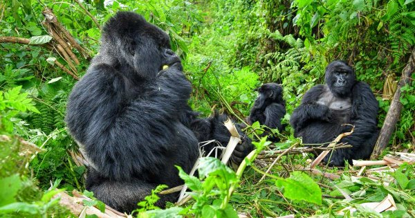 Amazing Adventure on Private Safari Tours in Rwanda, the Heart of Africa