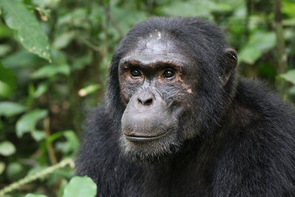 You Can Have Great Gorilla Safari if You Go to Uganda on a Private Tour