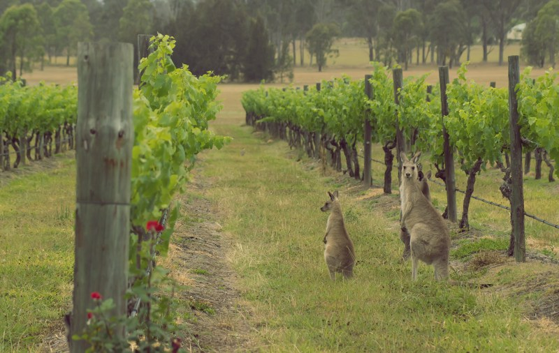 Incredible Hunter Valley Tours From Sydney