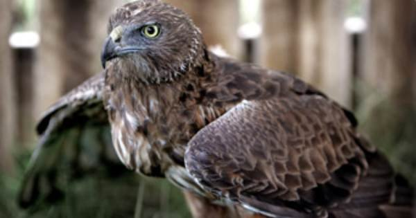 "Private Walk & Talk Tours ""Get Up Close to the Various Raptors"""