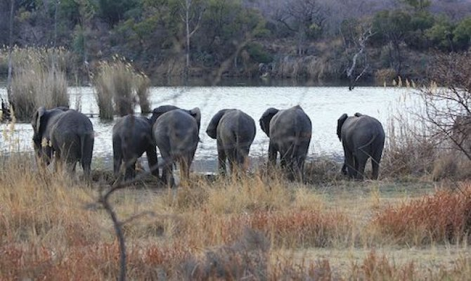 Unparalleled Southern African SAFARI!