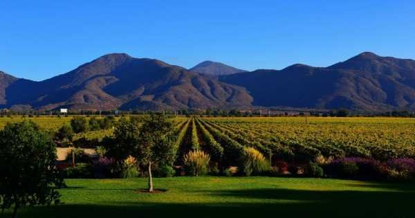 Casablanca Valley and Its Wines