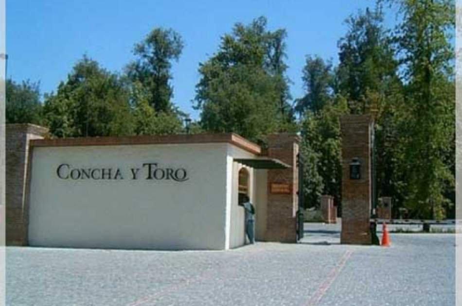 Concha & Toro Vineyard Private Tour