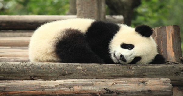 10 Days China Highlights and Panda Adventure