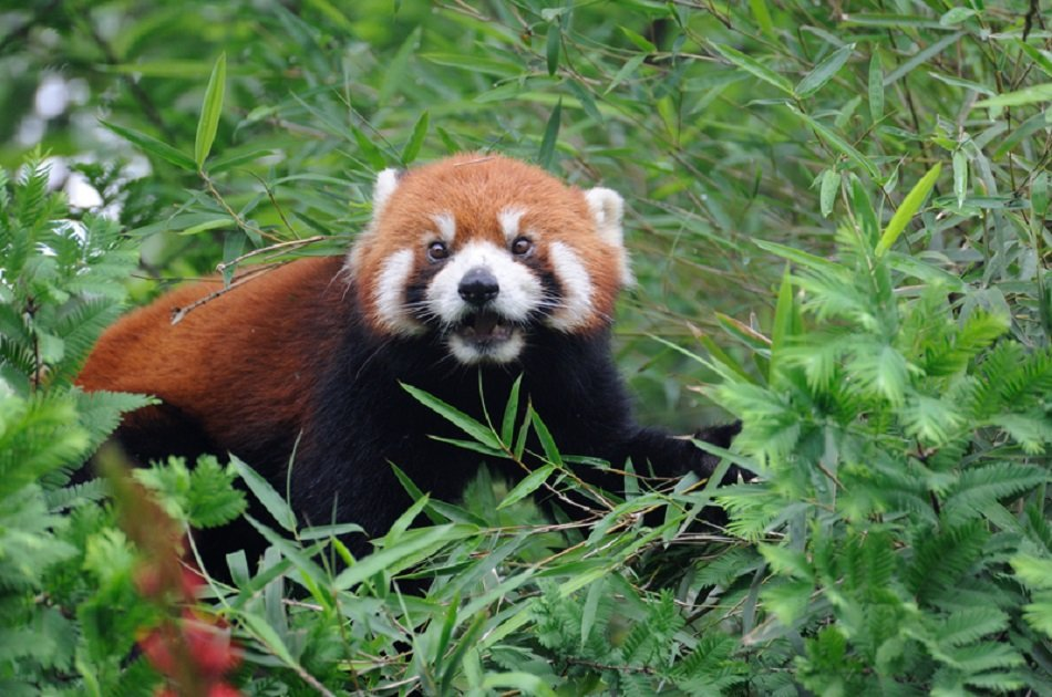 Chengdu Half Day Amazing Panda Base Private Tour