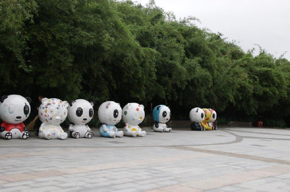 Chengdu Panda Private Volunteer Program at Dujiangyan Panda Base