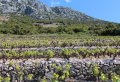 Dubrovnik Day Trip to Korcula Island