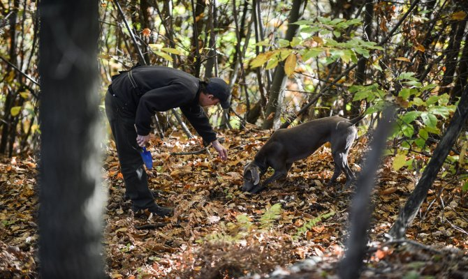 Unique Truffle Hunting Tour with a Famous Local Truffle Hunter