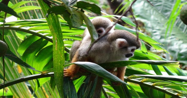 Monkey Land Explorer from Punta Cana