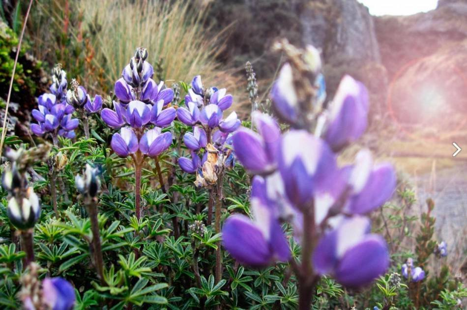 Excursion to Cajas National Park