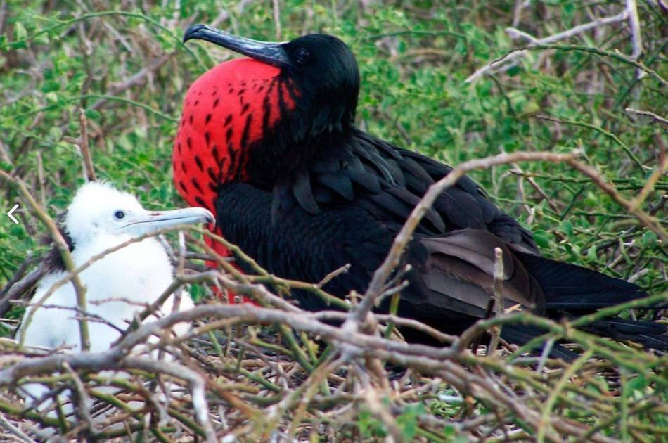 Mini Galapagos - 3 and a Half Star Hotel for 3 Days Private Tour