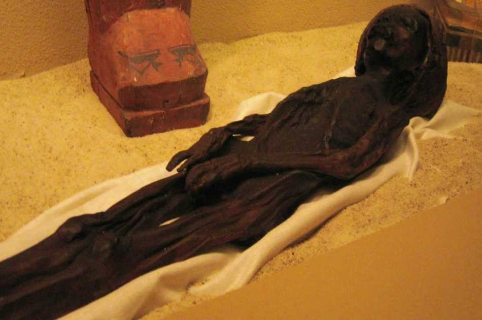 Luxor Museum & Mummification Museum Private Tour By Horse & Carriage or A/C Vehicle