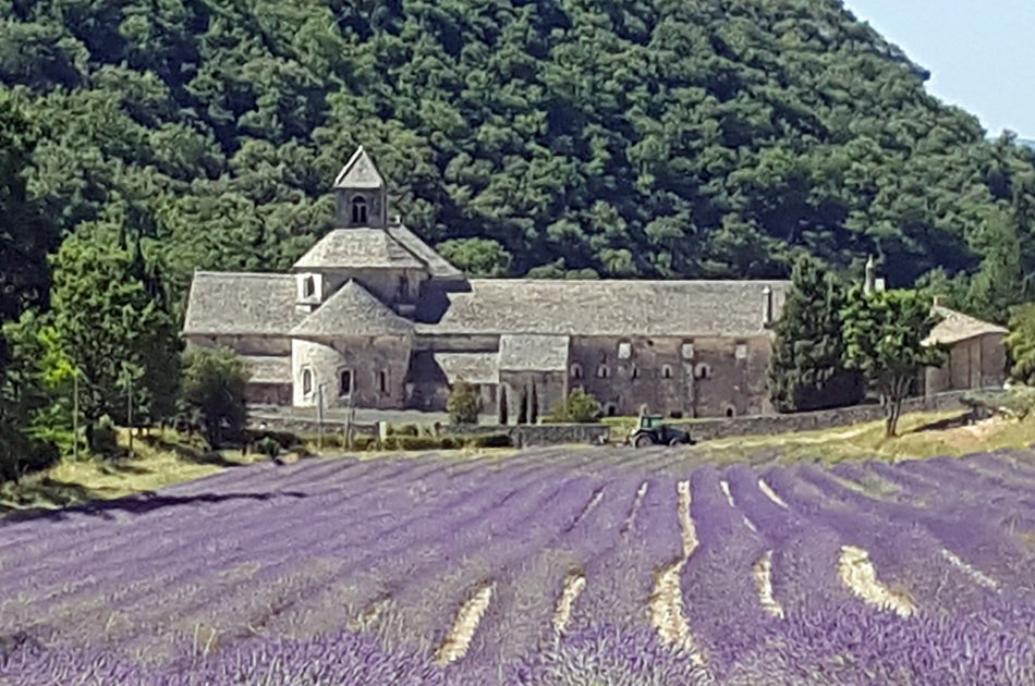 Private Lavender Tour in Sault from Avignon