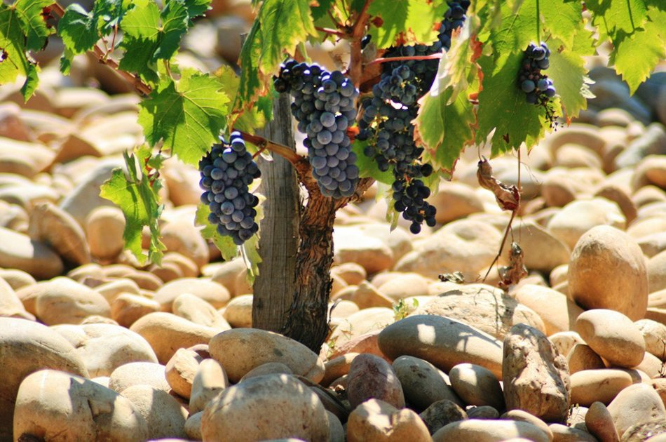 The Great Cotes Du Rhone Small Group Private Wine Tour from Avignon