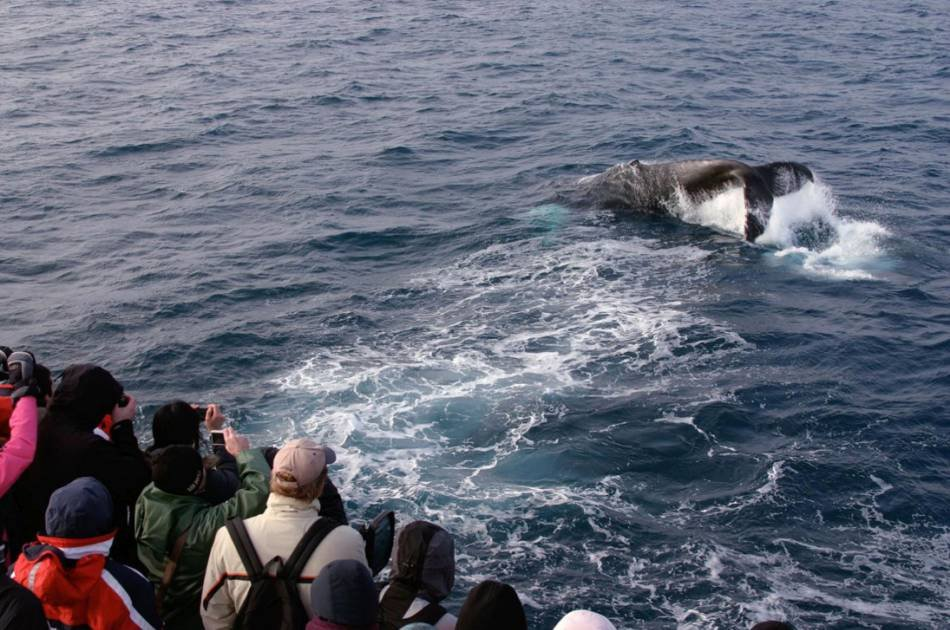 Whale Watching and Golden Circle Tour