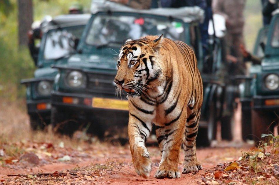 07-Days Golden Triangle Private Tour and Ranthambore Wildlife Safari from Delhi