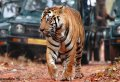 7 Days Golden Triangle with Ranthambore and Pushkar Tour