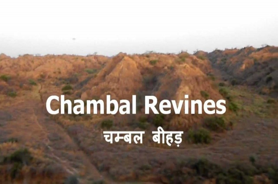 8 Day Golden Triangle And Chambal Safari Experience from Delhi