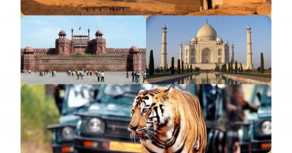 8-Day Golden Triangle Tour With Tiger Reserve