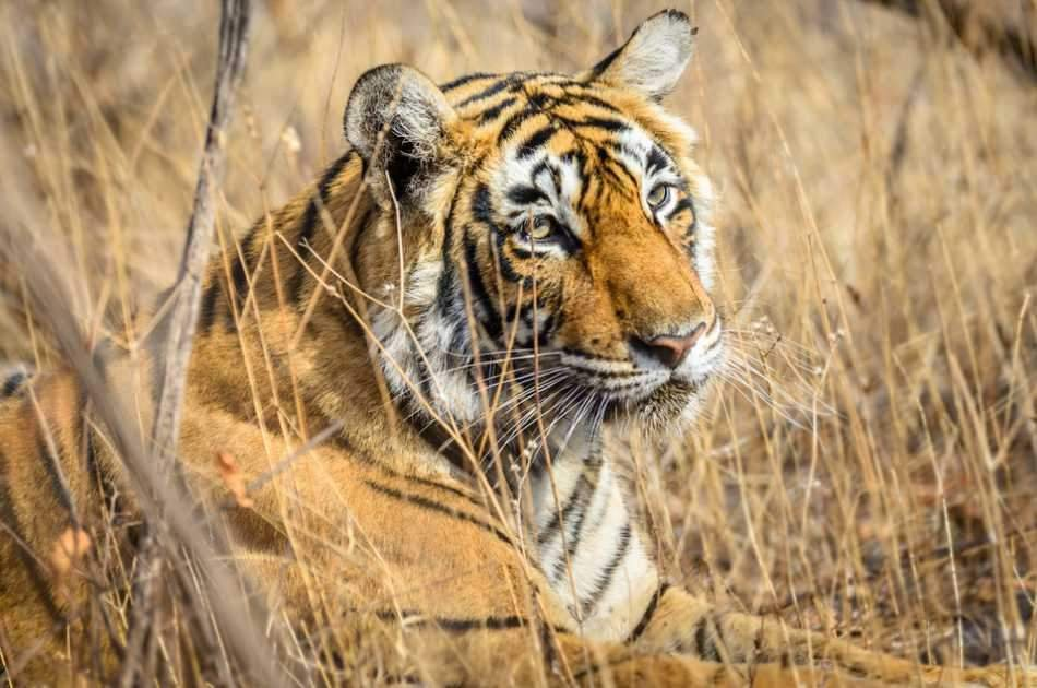 8 Days Golden Triangle Excursion with Ranthambore Wildlife Safari