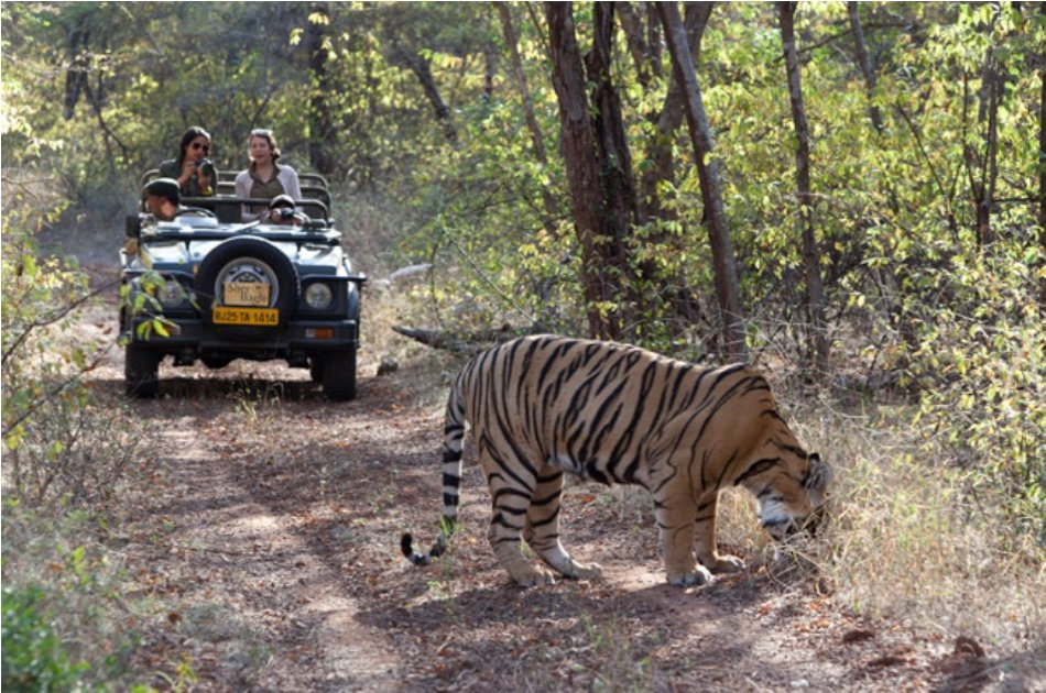 Adventures for 12 Days on India Safari And Beyond Tour