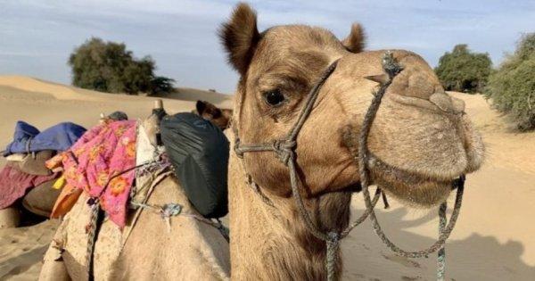 Camel Safari With Folk Dance & Marwari Dinner