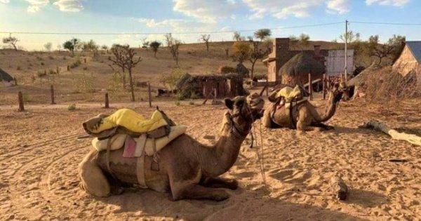 Jaisalmer City Tour & Camel Safari Private Tour
