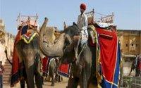 Best of Rajasthan with Tiger Safari Tour (14 Nights /15 Days)
