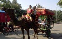 Unique Neemrana Weekend Tours From Delhi