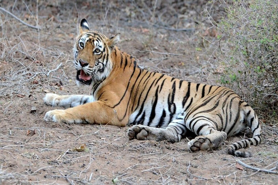 Private 3 Day Ranthambore National Park Tour from Delhi