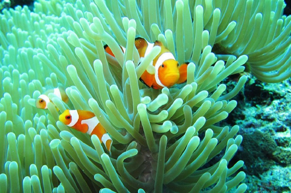 2 Day Bali Adventure: Bedugul, Mt Ljen Blue Fire Trek, Menjangan Island Snorkeling