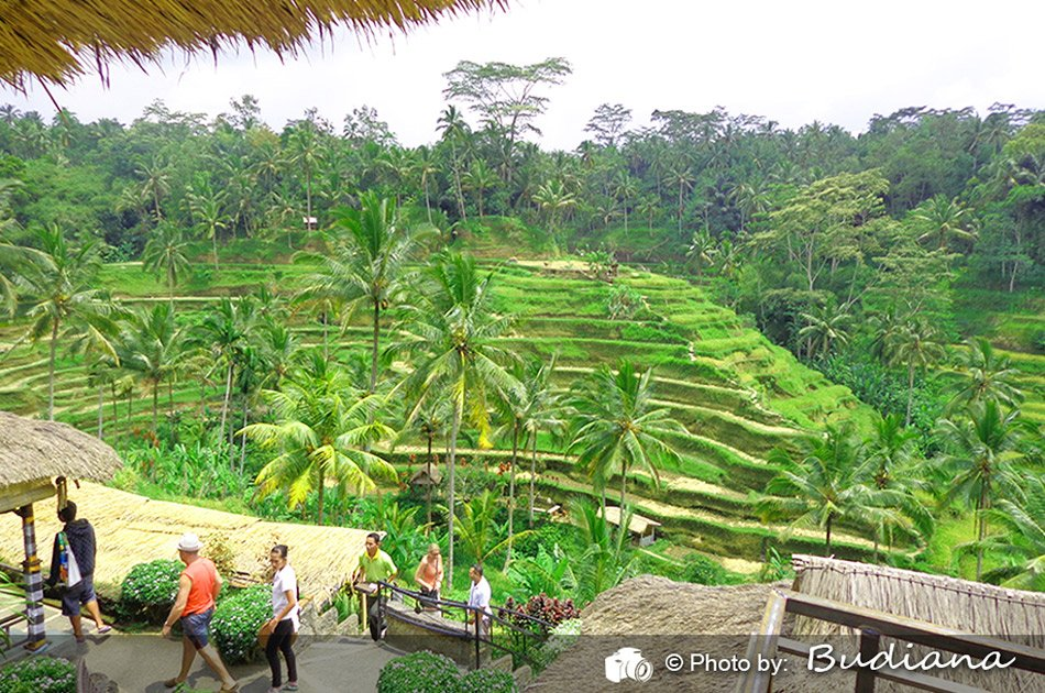 6 Hour Private Tour of Ubud, Monkey Forest, Barong and Rice Terraces With Lunch