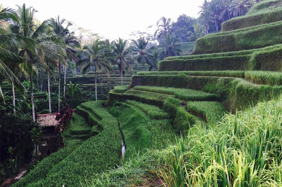 Bali All Inclusive Entrance Ticket Ubud Rice Terraces, Temples & Volcano Group Day Tour