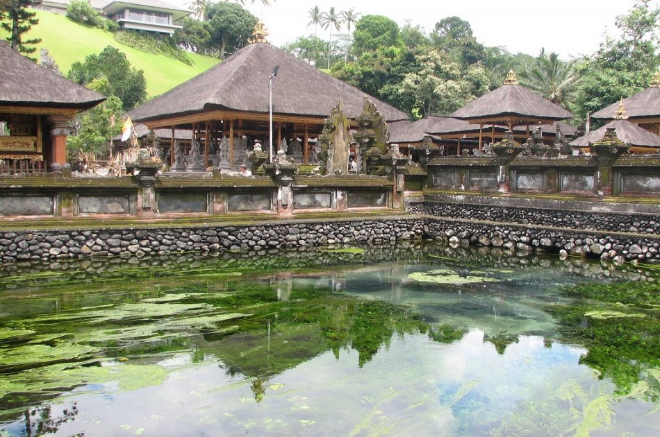 Bali Dolphin Watching Cruise, Culture & Ubud Private Tour