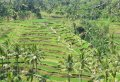 Bali Highlights Private Day Tour