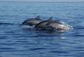 Bali Lovina Dolphin Tour