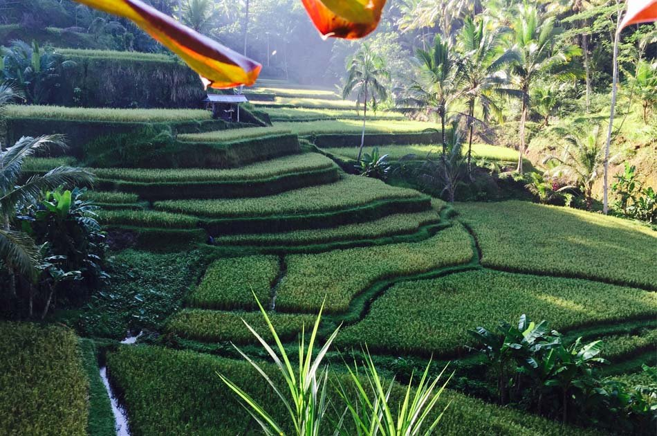 Bali Private Customized Full - Day Tour
