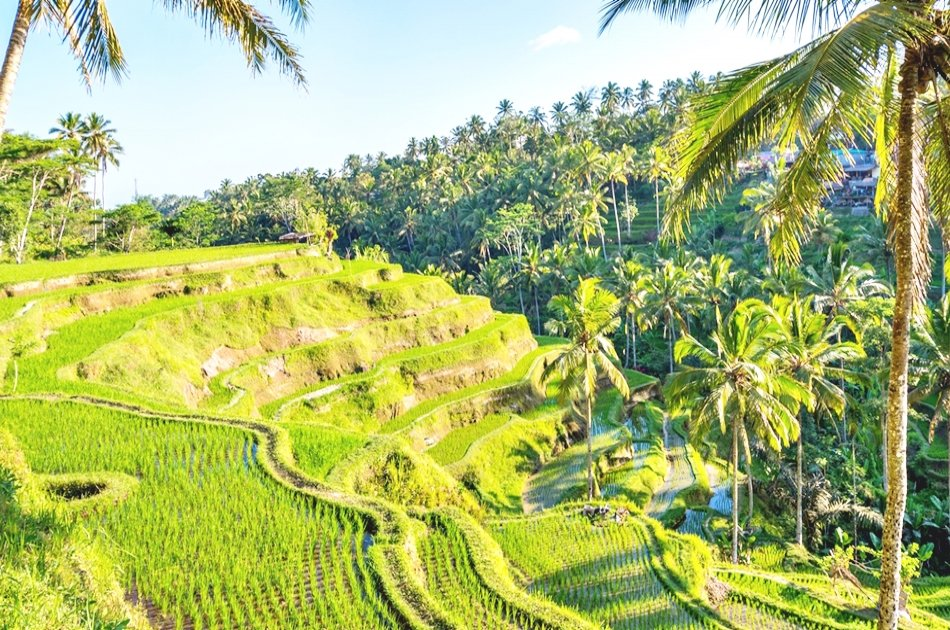 Bali's Eat Pray Love: Experience The Movie Scenes