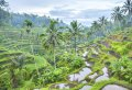 Bali's Eat Pray Love: Experience The Movie Scenes