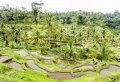 Best of Ubud Private Full-Day Tour: Waterfall, Rice Terraces, Art Villages