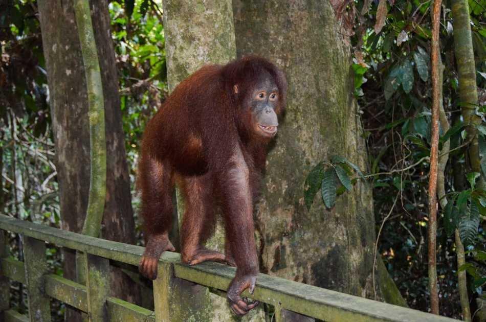 Breakfast With Orangutans