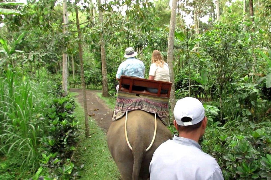 Enjoy a Thrilling Bali Elephant Ride Tour