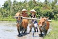 Experience Balinese Daily Life (with visit to Jatiluwih)