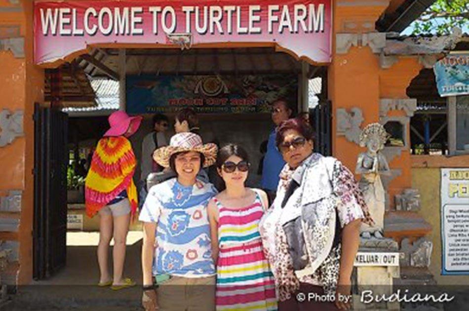 Half Day 3 in 1 - Coral Underwater Walks & Turtle Island Tour