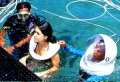 Half Day 3 in 1 - Coral Underwater Walks & Turtle Island Tour