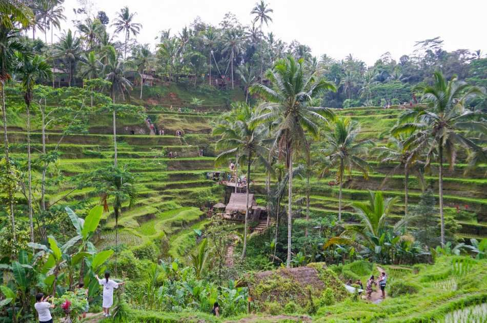 Half Day Fascinating Ubud and Tampak Siring Private Tour