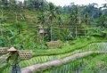 Half Day Fascinating Ubud and Tampak Siring Private Tour