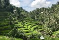 Half Day Tropical Trekking in Bali