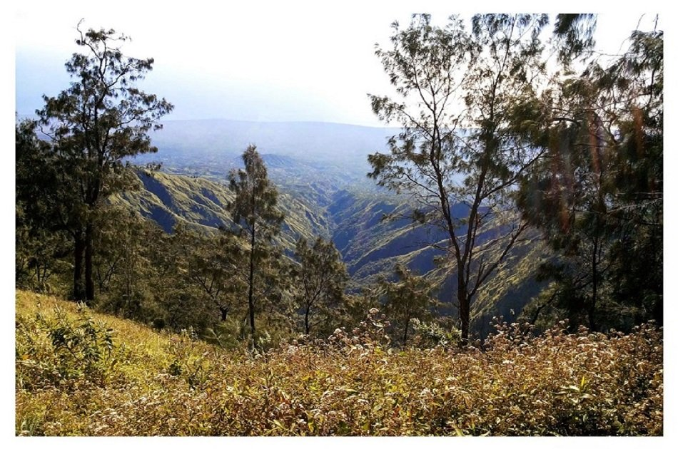 Kintamani and Volcano Tour with Luwak Coffee Tasting from Ubud