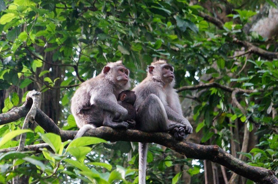Kintamani, Ubud  & Tegenungan Waterfall Private Tour